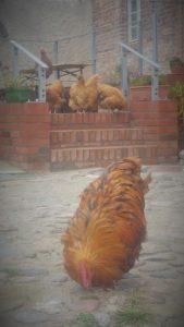 Manchmal steht die Terrasse auch unseren Gästen zur Verfügung ;-)